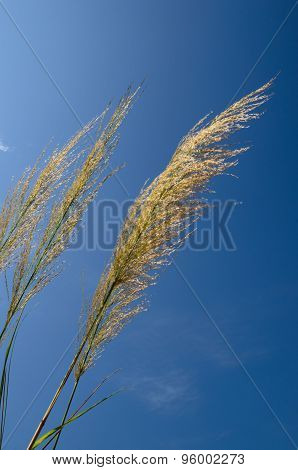 Flower Grass And Sky