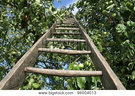 Ladder in an apple