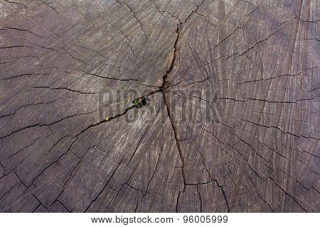 Old Cracked Stump Close-up. Backgrounds And Textures