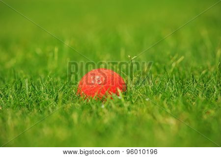 Orange golf ball on the green