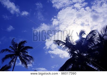 Sun behind the palm tree
