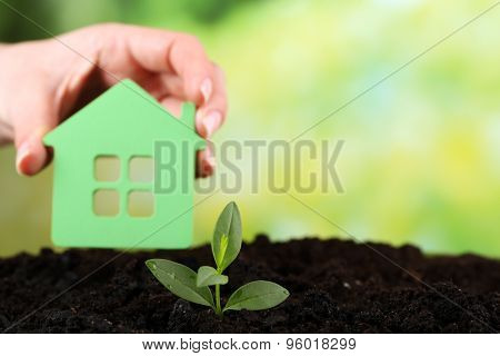 Green seedlings with small house in soil on bright background