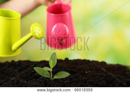 Watering green seedlings in soil on bright background