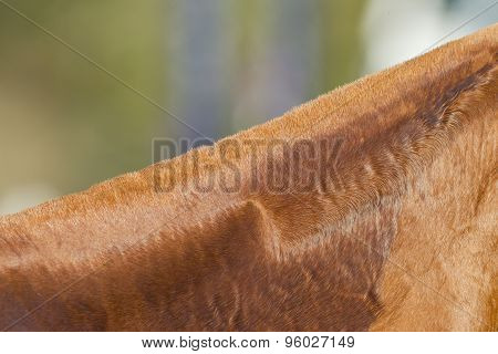 Horse Neck Detail