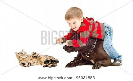 Cute child protects cat from the dog