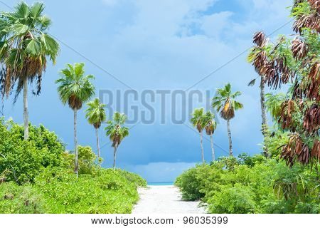 Tropical Dark Clouds Lime Green Vegetation On Path To Beach.
