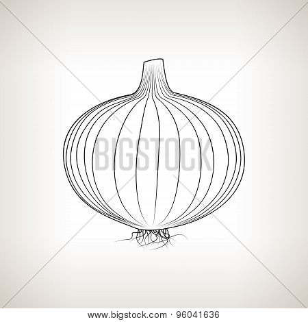 Onion In The Contours On A Light Background