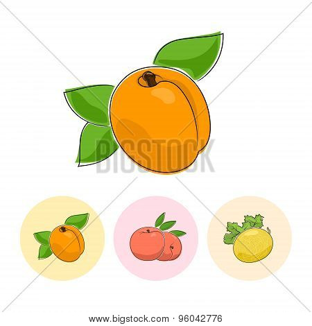 Fruit Icons, Apricot, Peach, Melon