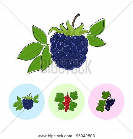 Fruit Icons, Blackberry, Redcurrant , Blackcurrant