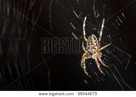 Macro Shot Of Spider In Web