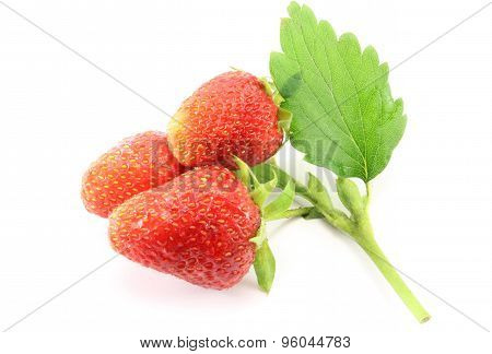 Sprig Of Strawberries