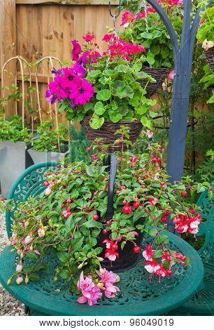 Fuschia Container Plant On Garden Table