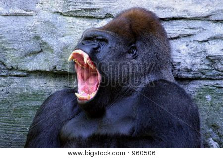 Fierce Gorilla