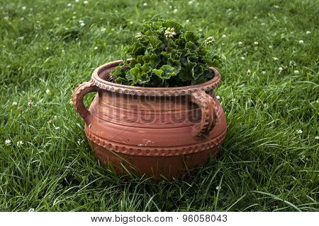 Decorative Clay Pot With Beautiful Flowers