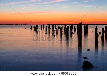 Old Pier And Bird