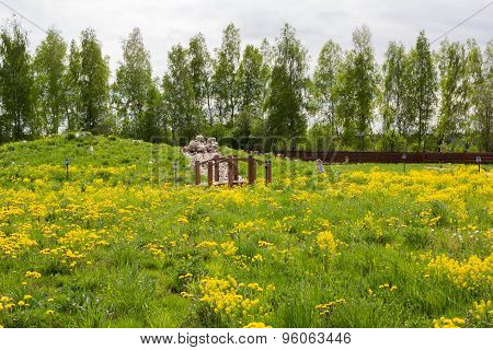 Little Girl Walks In Park Overgrown With Dandelions