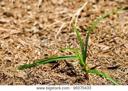 Fresh Green Grass.