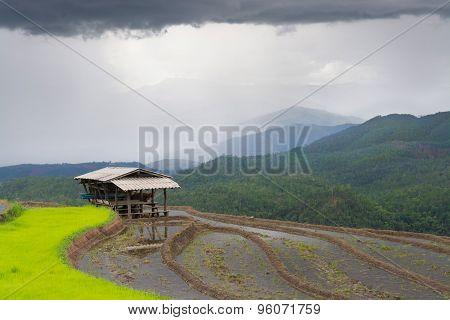 Beautiful Landscape Terrace Rice Field And Hut When Rainy Season