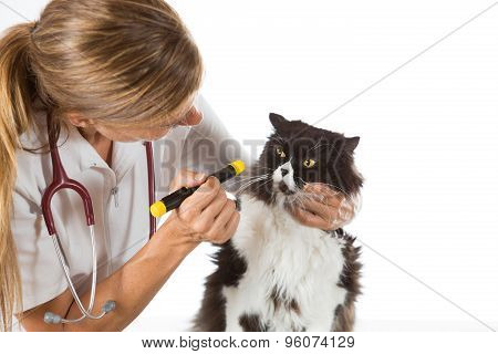 Veterinary Clinic With A Kitten