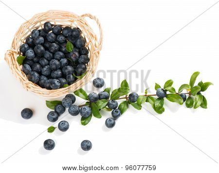 Basket With Blueberry
