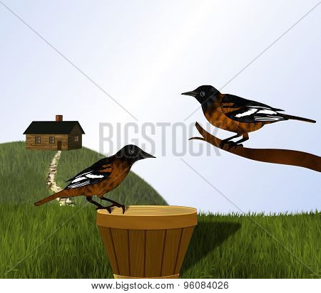 Baltimore Orioles and Cabin on Hill