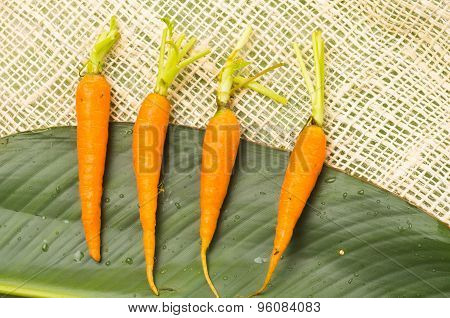 Four fresh aligned carrots placed on a big green leaf and rustic hemp fabric