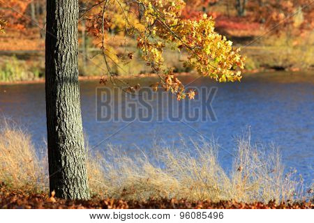Single autumn tree by the pond