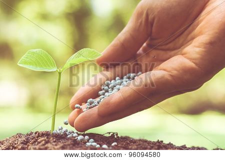 growing and nurturing baby plant