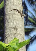 foto of lizard skin  - medium lizard in wild nature on palm tree close up - JPG