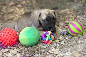 stock photo of toy dogs  - Cute puppy and toys outdoors with big puppy dog eyes - JPG