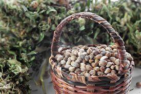 stock photo of seed bearing  - Hemp seeds in a small basket and dried hemp leaves - JPG