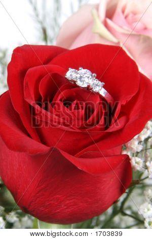 Ring In Rose Closeup