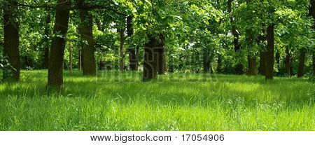 green forest with mystic grass