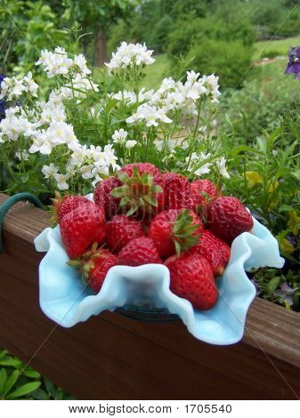 Strawberries In A Blue Dish