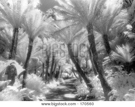 Ferns, Infrared