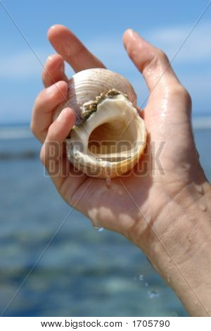 Shell Sacree,