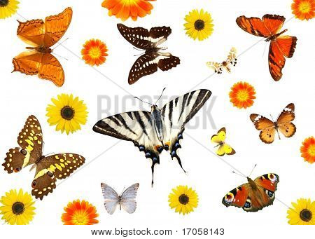 groups of butterflies and flowers isolated