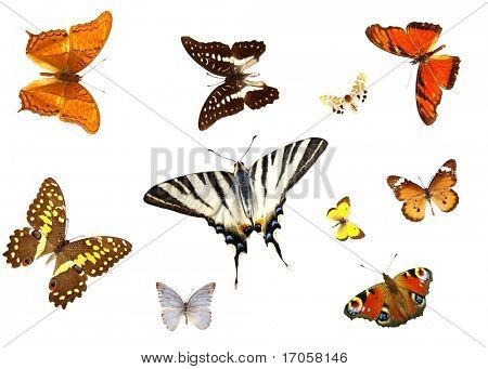 groups of butterflies isolated