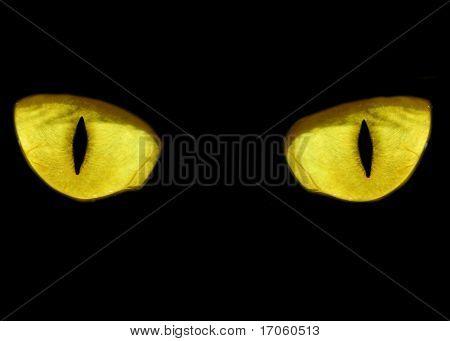 Yellow feline eyes in the dark