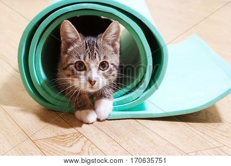 poster of cat sitting on a yoga mat. The Kitten is on the mat for yoga fitness.Lesson motivation for sports
