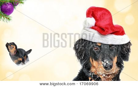 Dog New Year wish card