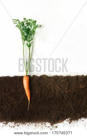 poster of Carrot grow in ground, cross section, cutout collage. Healthy vegetable plant with leaves isolated on white background. Agricultural, botany and farming concept