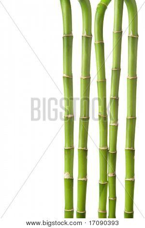 bamboo background isolated