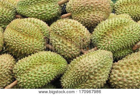 Image of fresh durian in the market Thailand