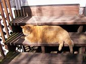 stock photo of wanton  - Large orange cat sprawls on outdoor steps king of all he surveys - JPG