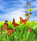 picture of landscapes beautiful  - Beautiful landscape with colorful butterflies - JPG