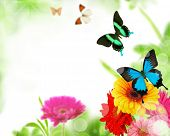 stock photo of beauty nature  - Beautiful nature background - JPG