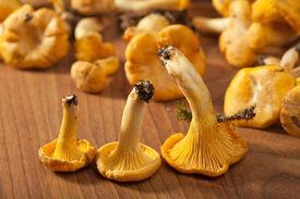 picture of chanterelle mushroom  - fresh chanterelle mushrooms - JPG