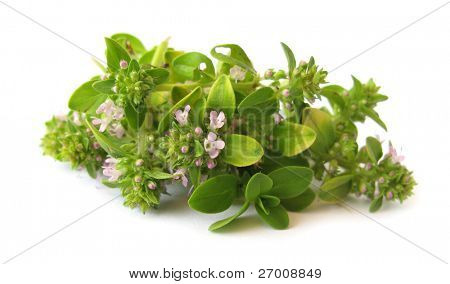 Thymus serpyllum Wild Thyme