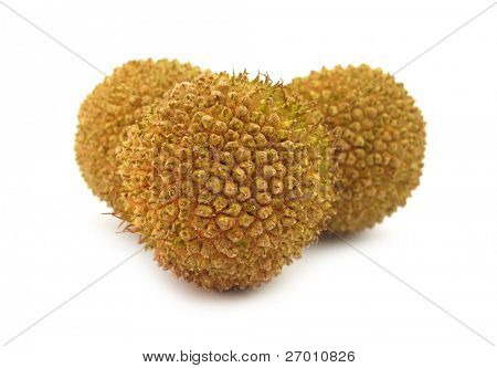 plane tree fruits